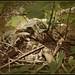 ♦ tortugas ♣ χελώνες ♦ by jose luis naussa (+3-7 millones