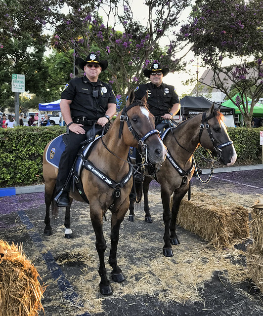 Downey Night Out police horses