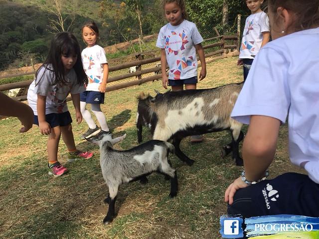 Zooparque em Itatiba | Ensino Fundamental Taubaté