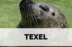 Texel, The Netherlands: complete travel guide | Your Dutch Guide