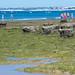 Praia da Galé -  Plataforma de Abrasão A_-4