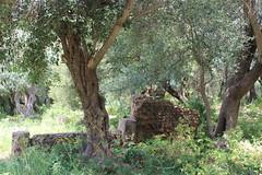 Tipasa, Roman Ruins