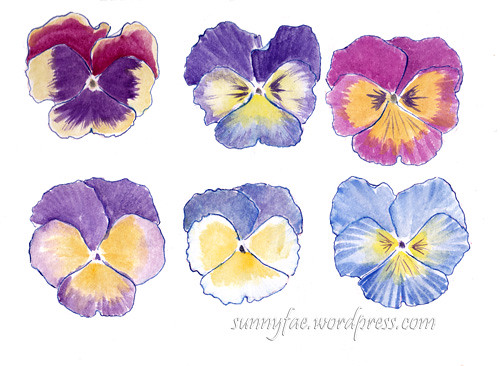 watercolour sketch of pansies heads