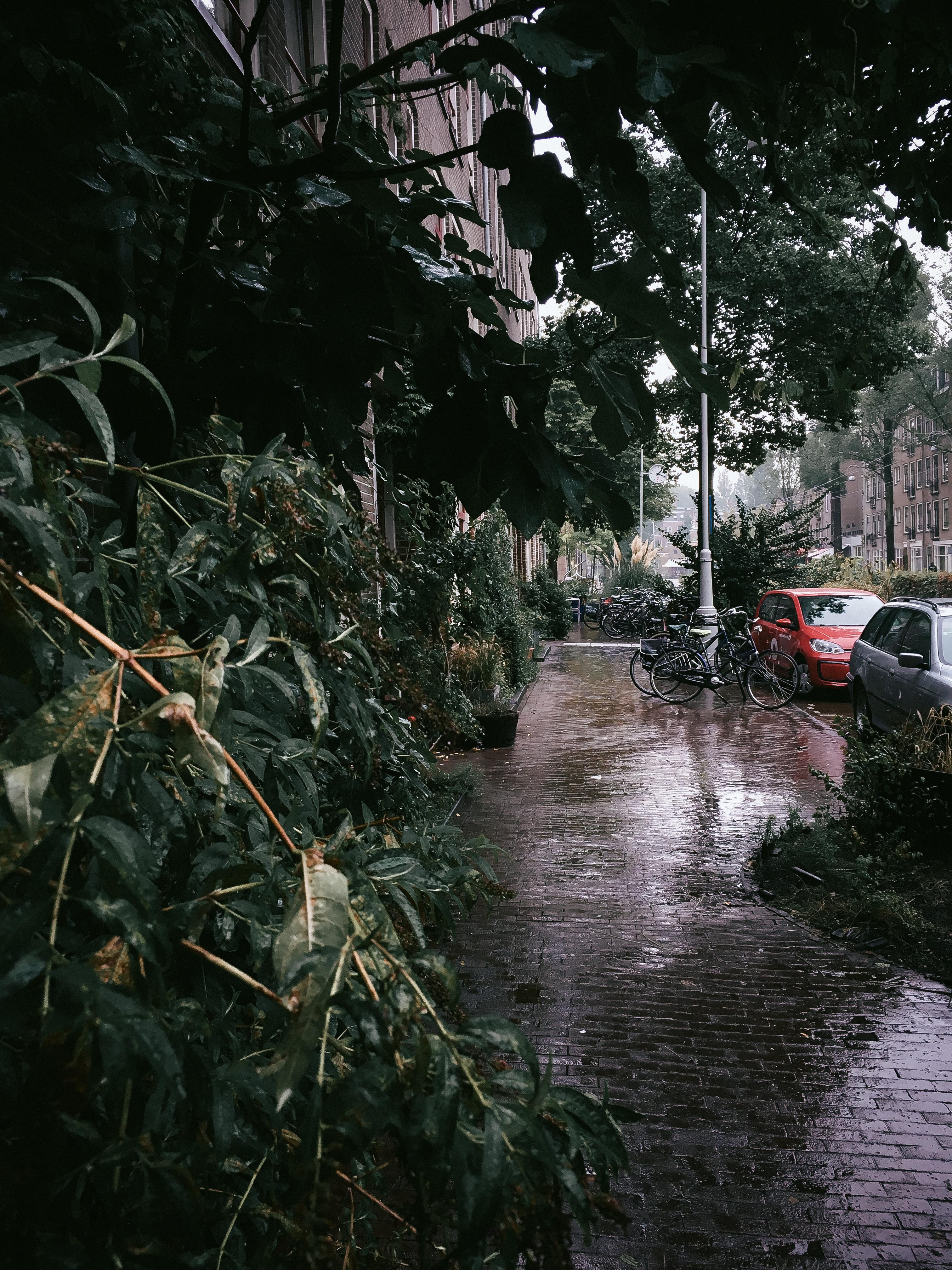 Amsterdam, Rain