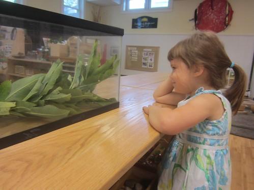 watching the caterpillar