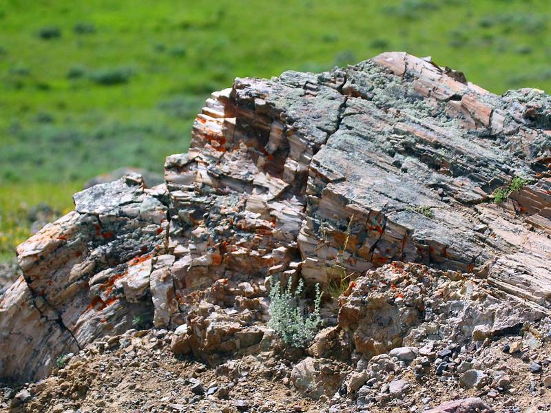 IMG_8156 Petrified Tree, Yellowstone National Park