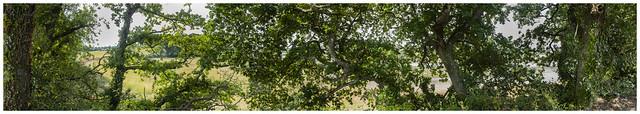 Green Panoramic, Fujifilm X-Pro2, XF23mmF2 R WR