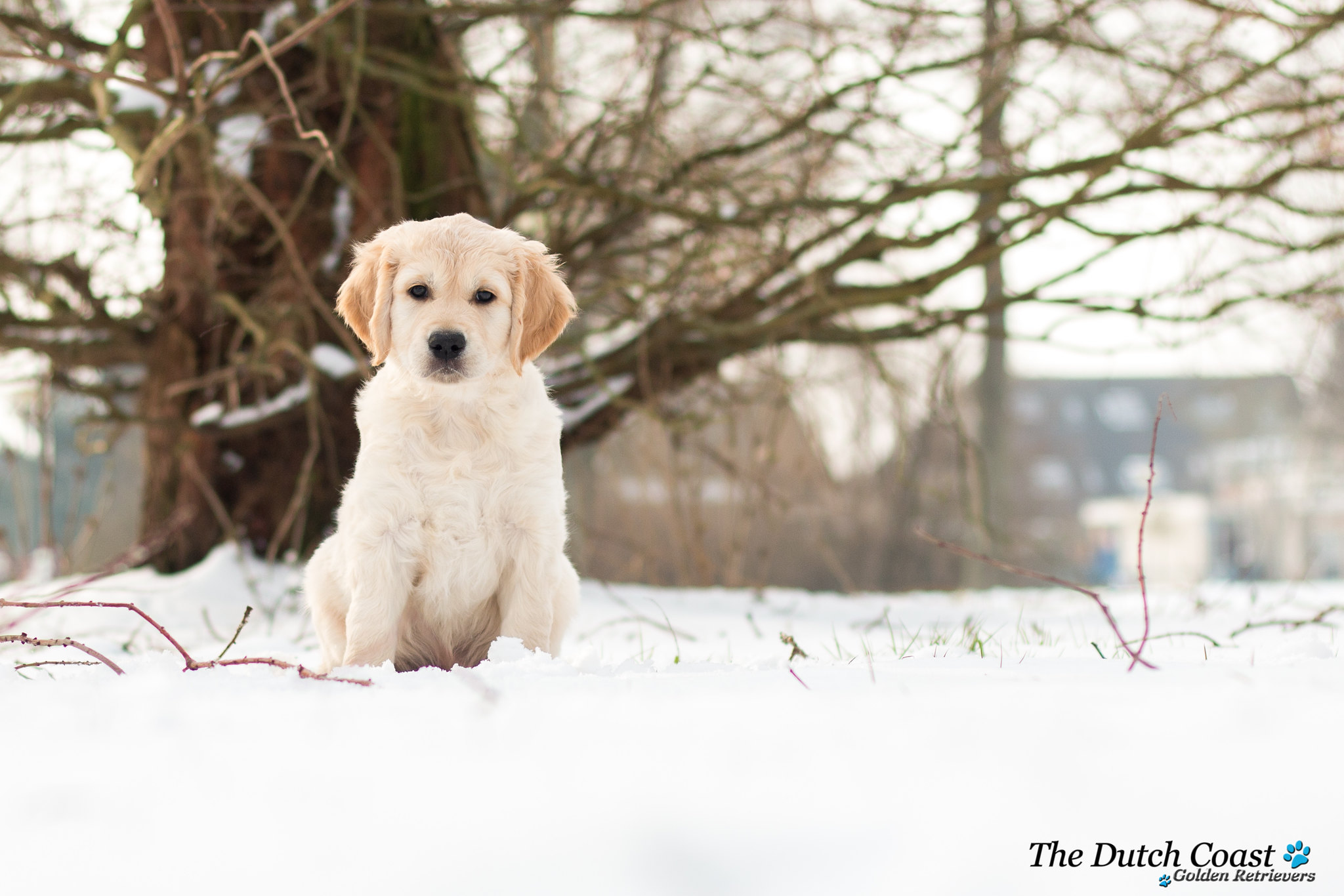 Joyca sneeuw