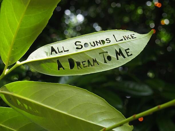 Dream Leaf © Geoff Burrage