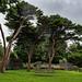 Trees-19959
