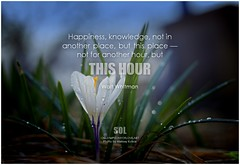 Walt Whitman Happiness, knowledge, not in another place, but this place — not for another hour, but this hour