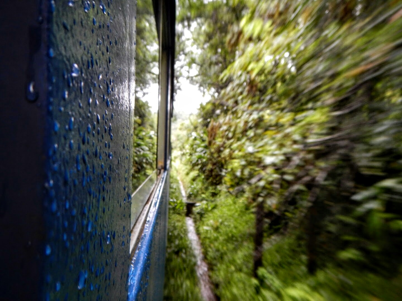 Train ride through the jungle