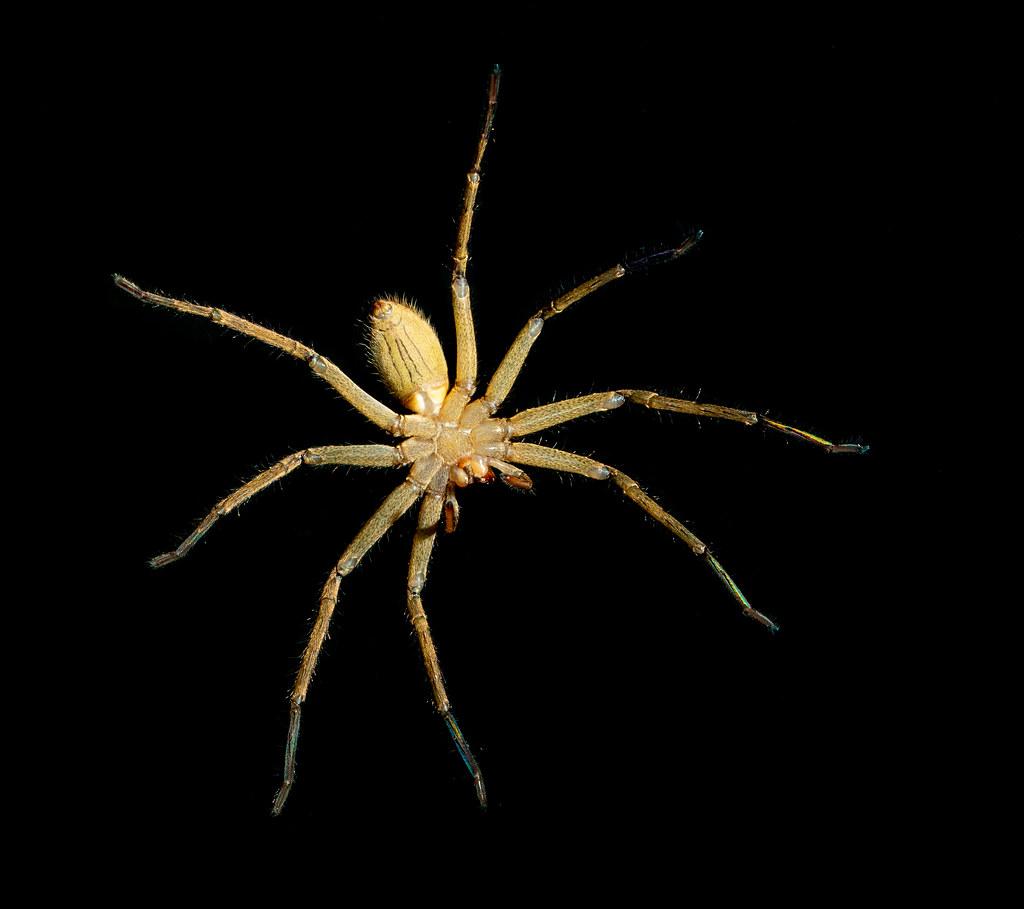 Spider_1