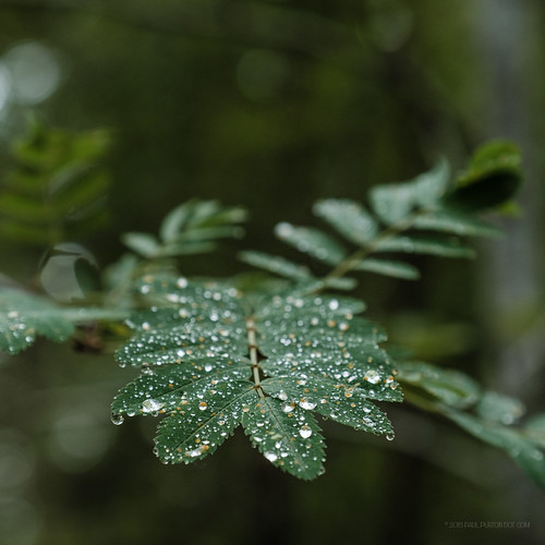 fuji grantownonspey scotland xh1 bokeh closeup depthoffield raindrop wood woodland