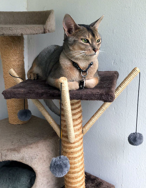 freddybalconycattree