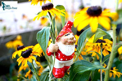 Blumen_Gartenzwerg_02