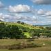 Sheep grazing at Jumble farm