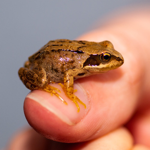 365.249 & 100x.73 - Frog Thumbnail