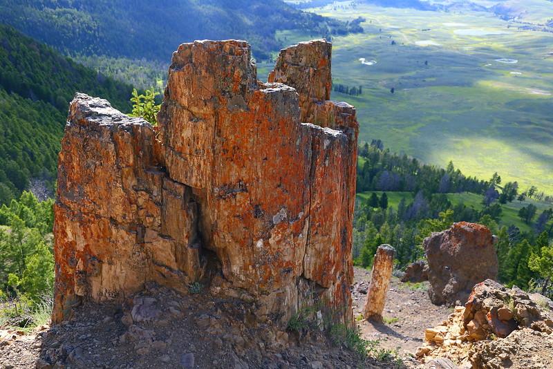 IMG_8403 Petrified Tree, Yellowstone National Park