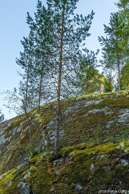 Сосны на скале, Гора Филина, Хуухканмяки, Лахденпохья