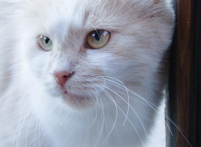 Curious cat, Canon POWERSHOT SX230 HS