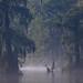 Early morning mist, Edward Ball Wakulla Springs State Park, Florida by vambo25