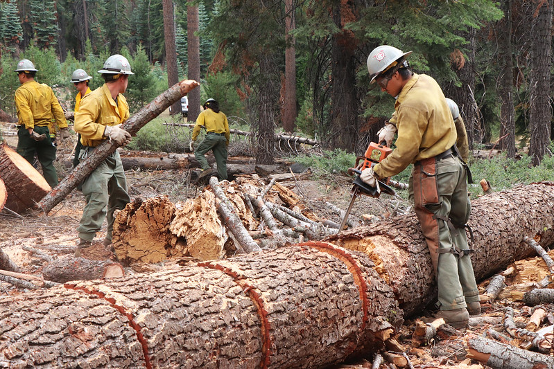 people cutting downed trees