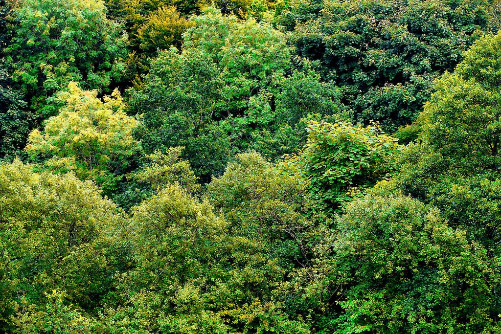 dawsholm woods