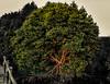 hutan mangrove 3