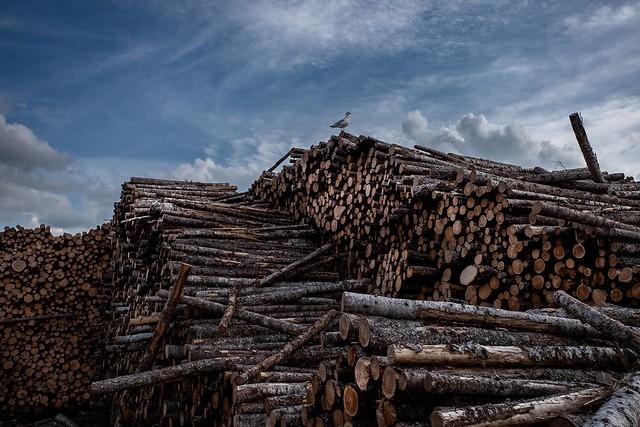 lumber yards of Cornerbrook 1