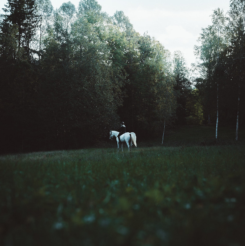 Moody forest with Horse