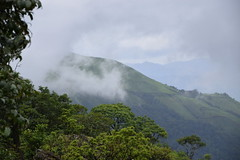 HILLS IN CHIKMAGALUR