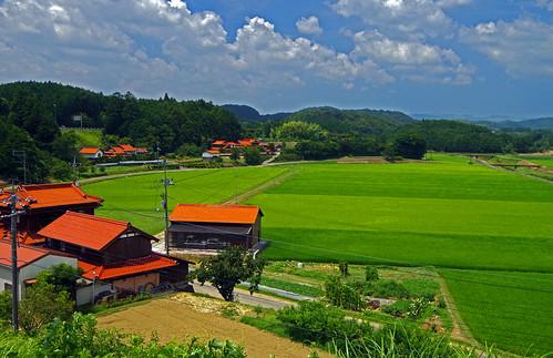 Rice and orange roof tiles, Mine, Yamaguchi  山口県 美祢市