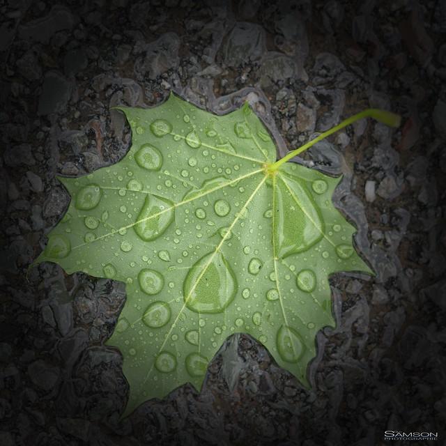 Jour de pluie -1