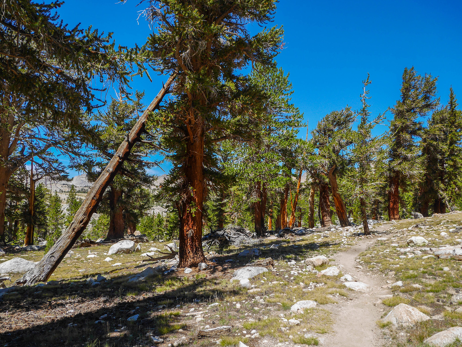 JMT open forest