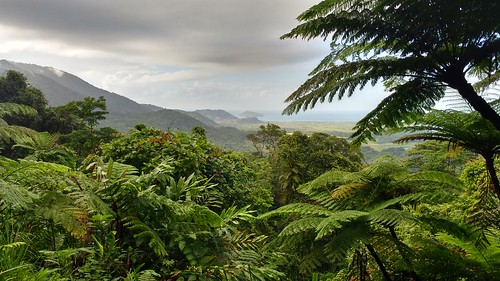View from Alexandra Lookout Daintree National Park