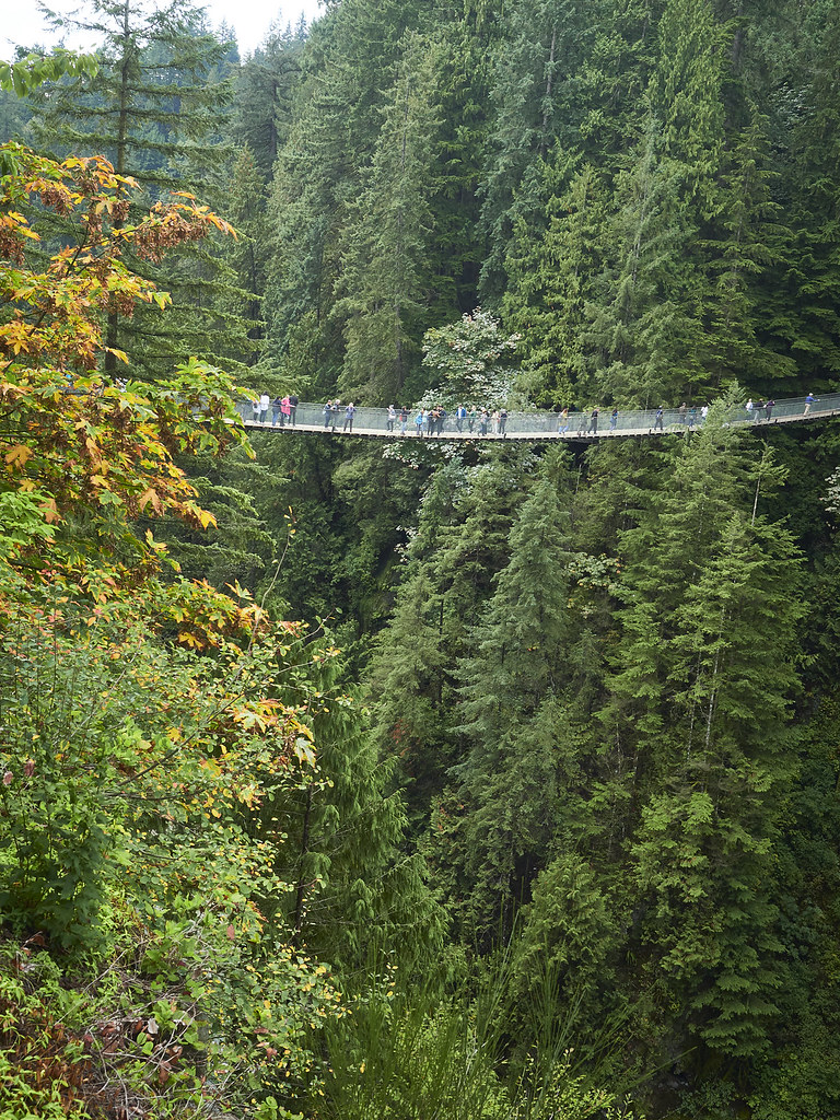 Capilano Forest Vancouver