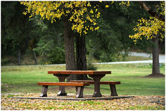 Park benches!!