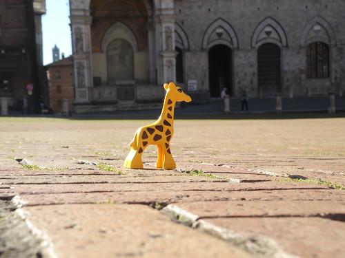 Presenza 9493 Visitando Siena