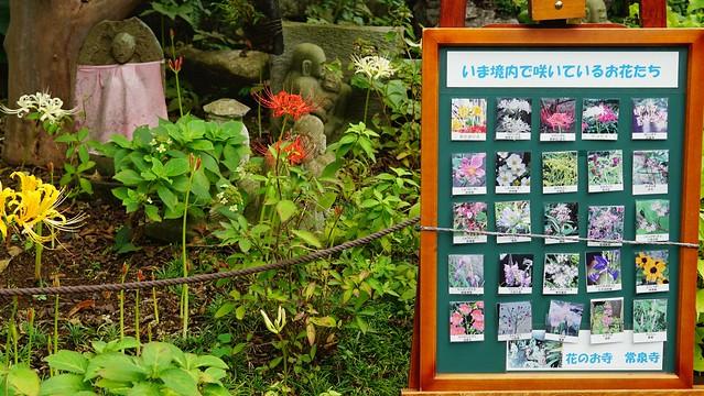 常泉寺(花寺)DSC00701-01