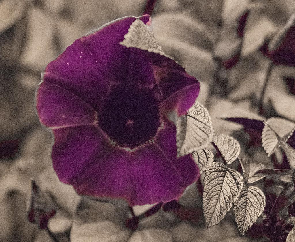 UV Plants_31
