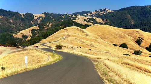 santarosa california usa nature stevenpmoreno sonomacountyregionalparks outdoorphotography stevenmorenospix hiking camping travelpictures galaxys9