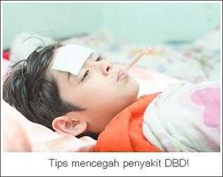 Cara Mencegah Munculnya Wabah Penyakit DBD