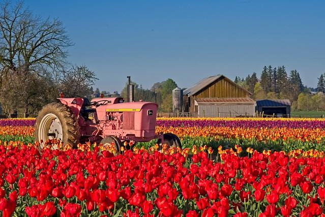 Tractor in Tulip Field, Nikon D610, Nikon AF-S Nikkor 85mm f/1.8G