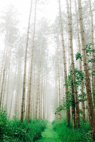 Foggy Day_1