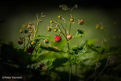 Pflanzen und Früchte / plants and fruits