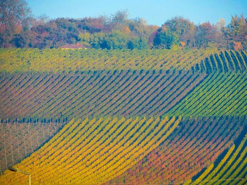 Vinyards near Bamberg  (3 of 3)
