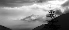 Tree in mountain landscape