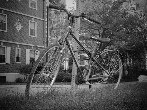 briburt olympus omdem5ii lumixg25mm bicycle cycle bike bikes street cambridge monochrome bw blackandwhite massachusetts harvard cobblestones sign pole trees leaves streetscene contrast