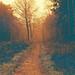 A Path to Autumn